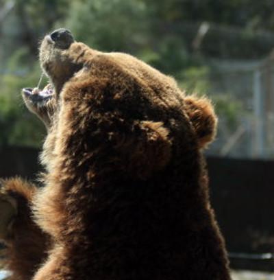 クマの餌やりイベント