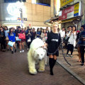 渋谷に白クマ
