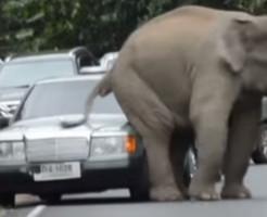 象がベンツを踏みつぶす