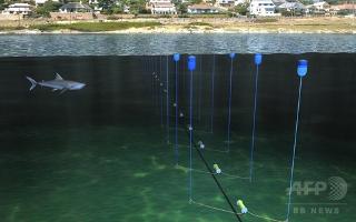 サメよけの電気バリアー-南アで実験