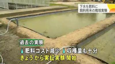下水処理水でお米の栽培実験-山形県鶴岡市
